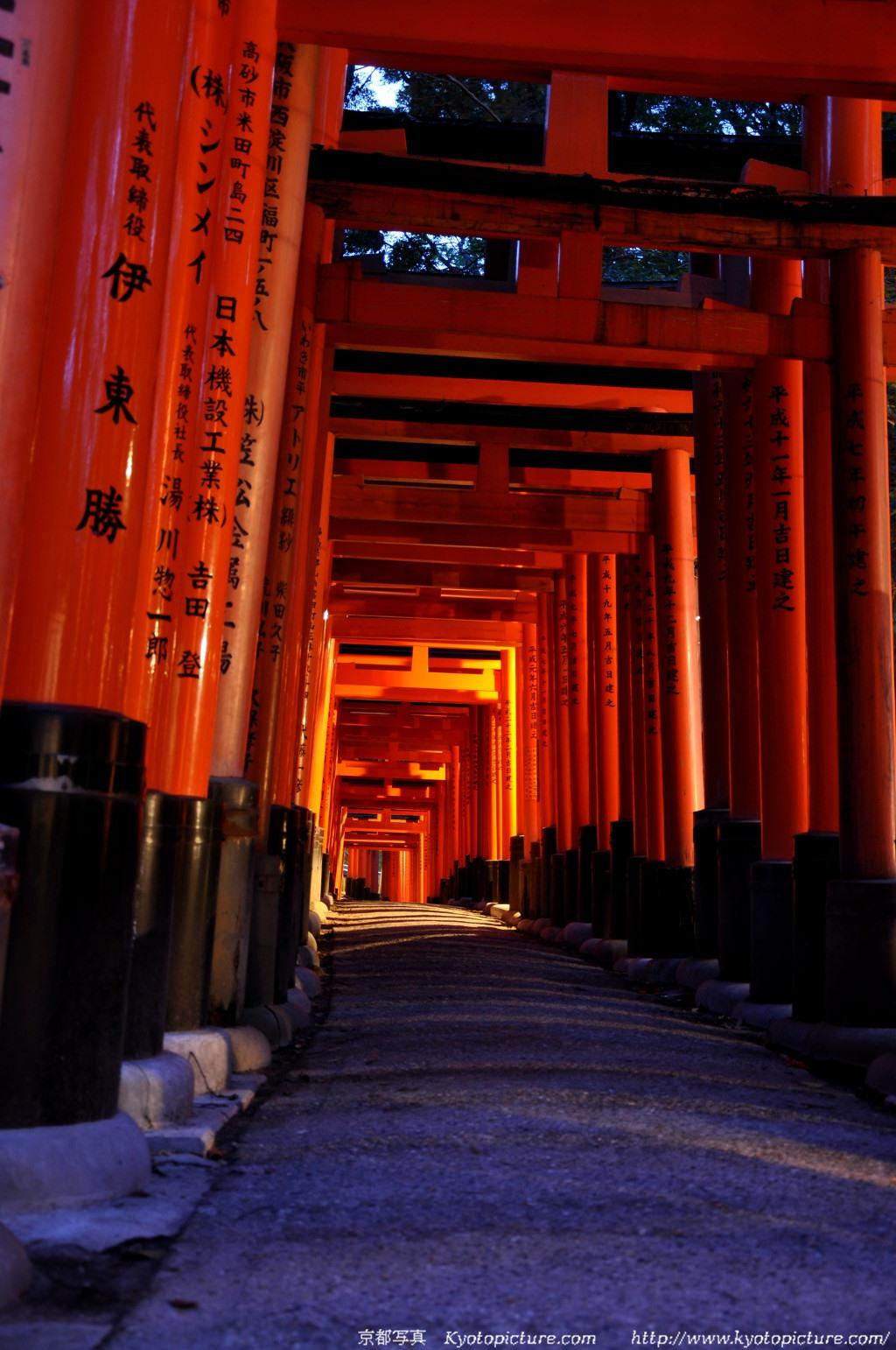 伏見稲荷からの夜景壁紙写真