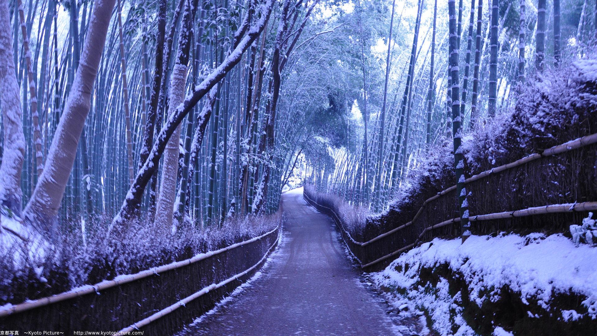 冬の壁紙写真